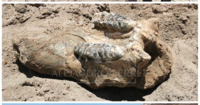 Una vez más el consuelo vuelve hacer historia, tras hallazgo de huesos antiguos